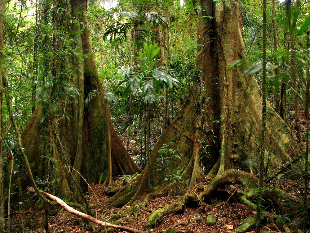 Rainforest Week – 100 Word Challenge Homework | 5A